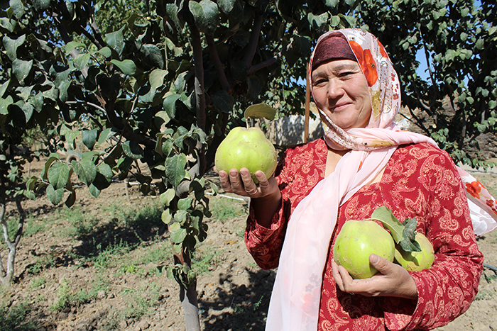 Maryam Hasanova grew these quinces after completing a training on backyard gardening—part of IntraHealth's Feed the Future Tajikistan Health and Nutrition Activity to improve the health and nutrition of mothers and children in Tajikistan. Photo by Samariddin Bahriddinov for IntraHealth International.