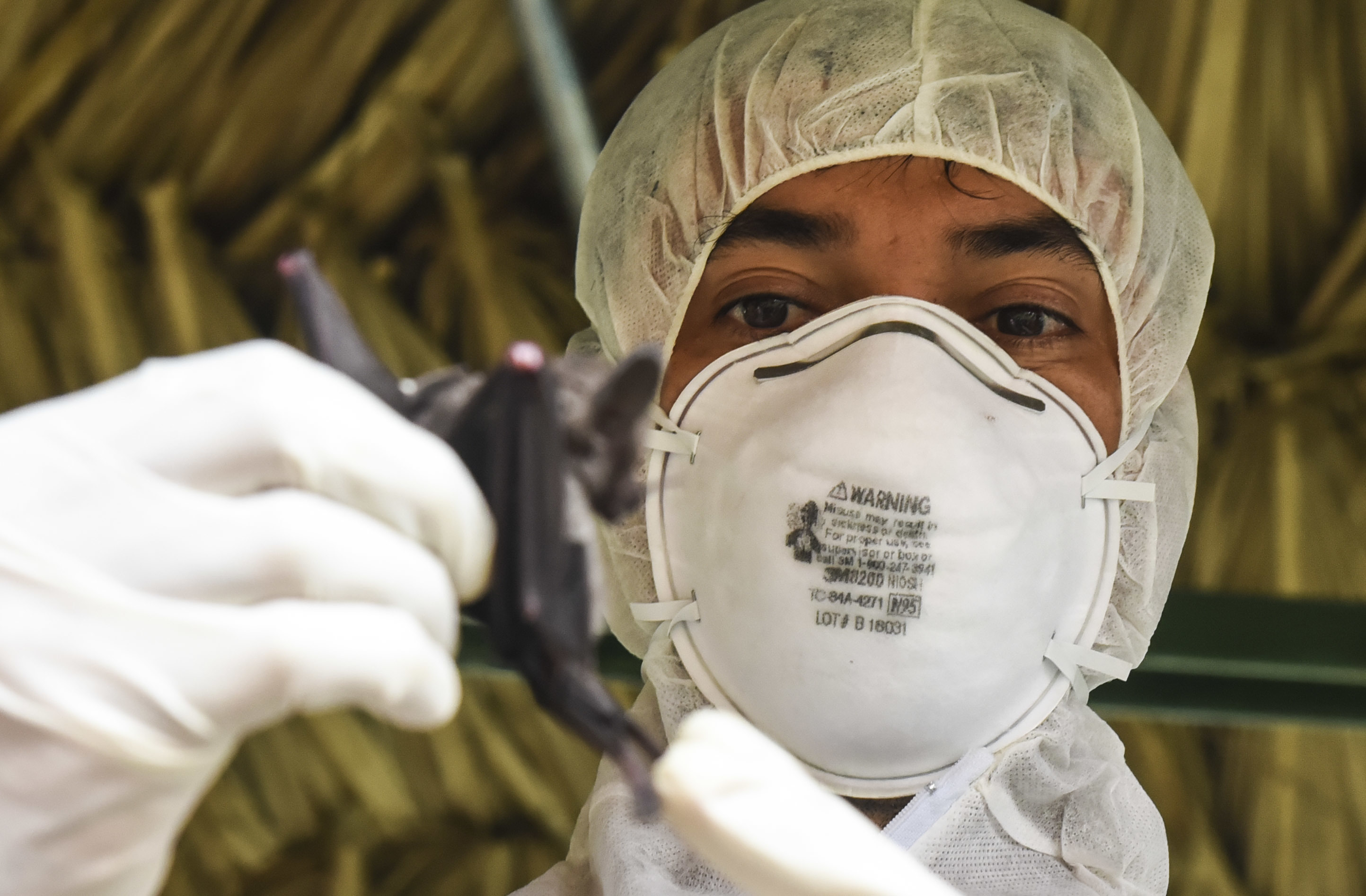 Publio Gonzalez, a biologist with the Gorgas Institute, holds a bat in Meteti, Panama, June 6, 2018, as part an Emerging Infectious Diseases Training Event (U.S. Air Force photo by Senior Airman Dustin Mullen).
